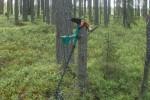 Поиск монеты в лесу