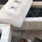 Уникальная находка мумий жуков-скарабеев