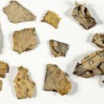 В Израиле найдены фрагменты Свитков Мертвого моря